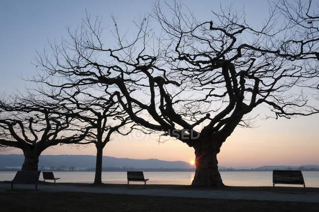 Germania, Lago di Costanza, panchine e alberi al tramonto sul lago — Foto stock