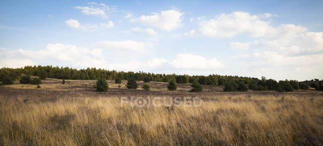 Germany, Lower Saxony, Lueneburg Heath during daytime — Stock Photo