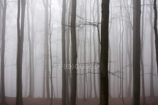 Germany, Hesse, fog in the nature park Taunus — Stock Photo