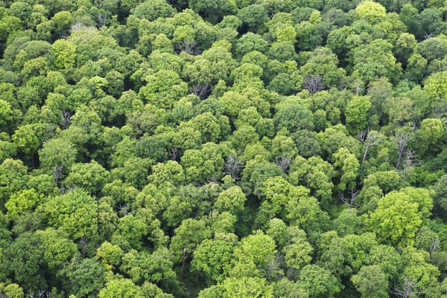 Німеччина, вид на ліс в Oppin денний час — стокове фото