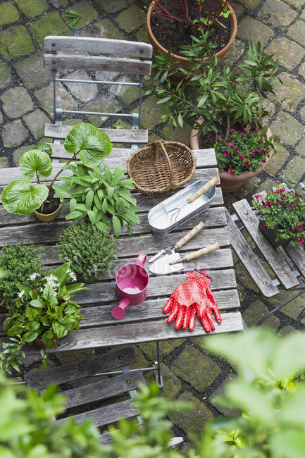 Gardening, different medicinal and kitchen herbs and gardening tools on garden table — Stock Photo