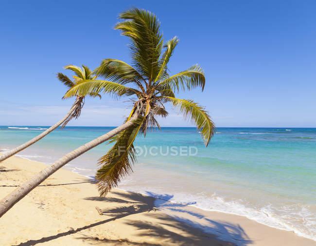 Тропический пляж с пальмами на дневной свет, Доминиканская Республика — стоковое фото