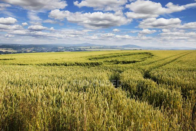Paesaggio agricolo del campo della Renania-Palatinato, Germania — Foto stock