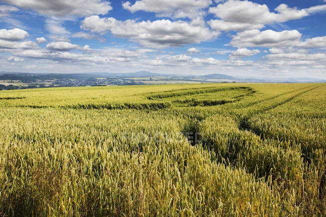 Agricultural field landscape of Rhineland-Palatinate, Germany — Stock Photo