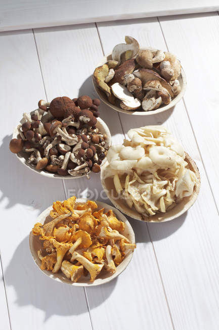 Fresh mushrooms, Agrocybe aegerita, Golden Oyster Mushrooms, Chanterelles and Ceps on wooden table — Stock Photo