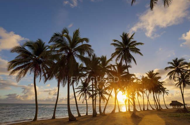 Пляж с пальмами на закате, Доминиканская Республика — стоковое фото