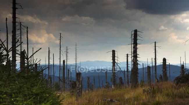 Allemagne, Bavière, Parc National la forêt bavaroise, dépérissement de la forêt — Photo de stock