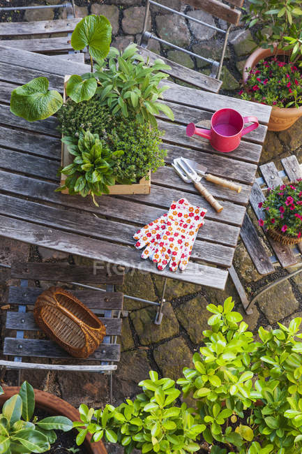 Gardening with different medicinal and kitchen herbs and gardening tools on garden table — Stock Photo
