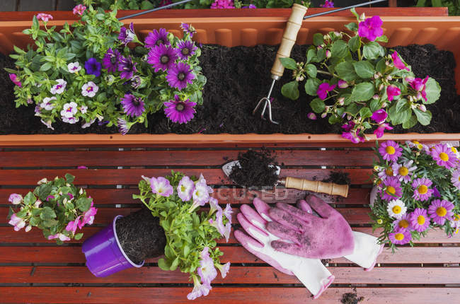 Садівництва, різних навесні і влітку квітів, квітка коробки і садівництво інструменти на садовий стіл — стокове фото
