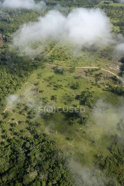 Полоснув і спалили amazon rainforest, Бразилія, Para, Itaituba — стокове фото