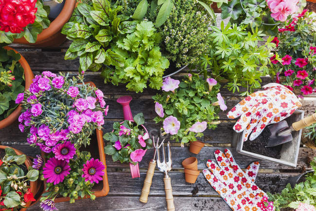Giardinaggio, diverse erbe medicinali e da cucina e attrezzi da giardinaggio — Foto stock