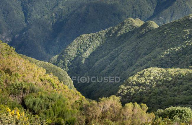 Portugal, Madeira, planalto Paul da Serra, vista para o vale — Fotografia de Stock
