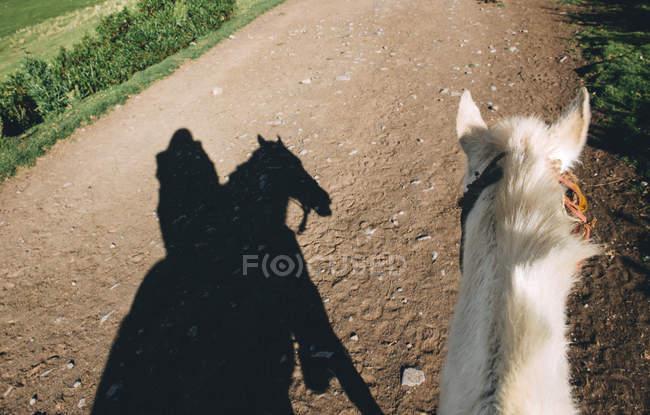 Ombre de femme équitation cheval sur la route de terre — Photo de stock