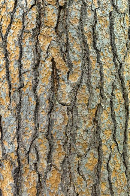 Vue de l'écorce d'arbre, gros plan — Photo de stock