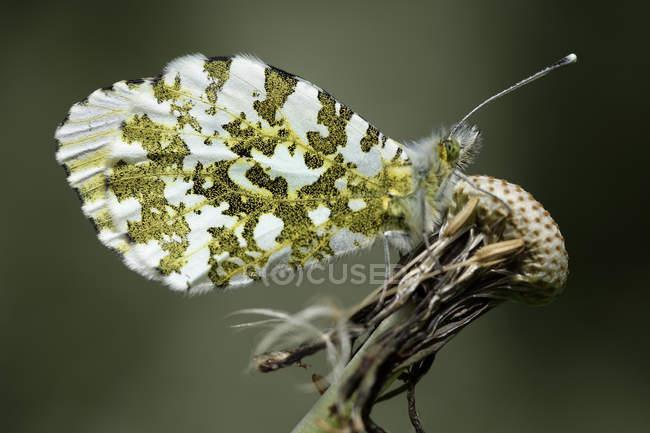 Зорька, Зорька, сидя на полевые цветы — стоковое фото