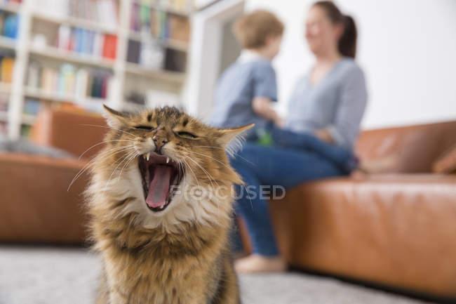 Sbadigliare gatto seduto in soggiorno, madre e figlio giocare in background — Foto stock