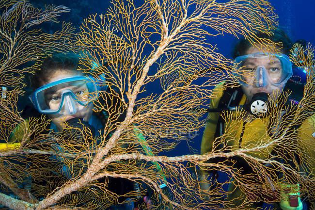 Палау, Тихого океана, два аквалангистов позади узловатые вентилятора коралловых — стоковое фото