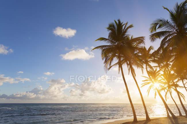 Spiaggia tropicale con le palme al tramonto, Repubblica Dominicana — Foto stock