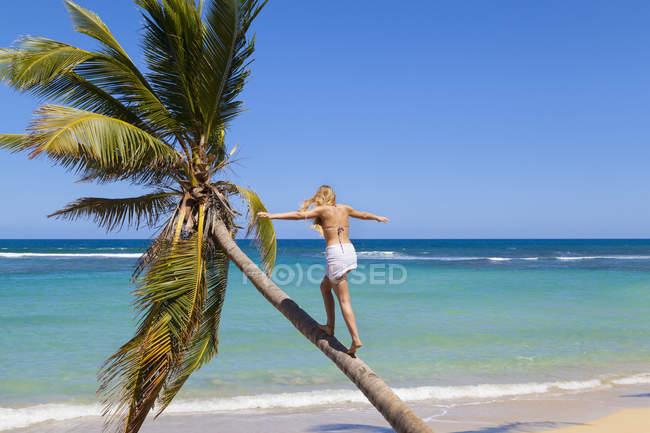 Домініканський Rebublic, молода жінка, скелелазіння пальмових дерев на тропічні пляжі — стокове фото