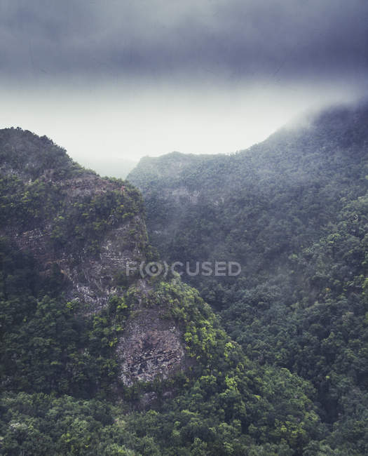 Espagne, îles Canaries, Los Tilos, forêt de lauriers et brouillard — Photo de stock
