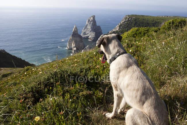 Portugal, Sintra, Praia da Ursa, cachorro na costa durante o dia — Fotografia de Stock