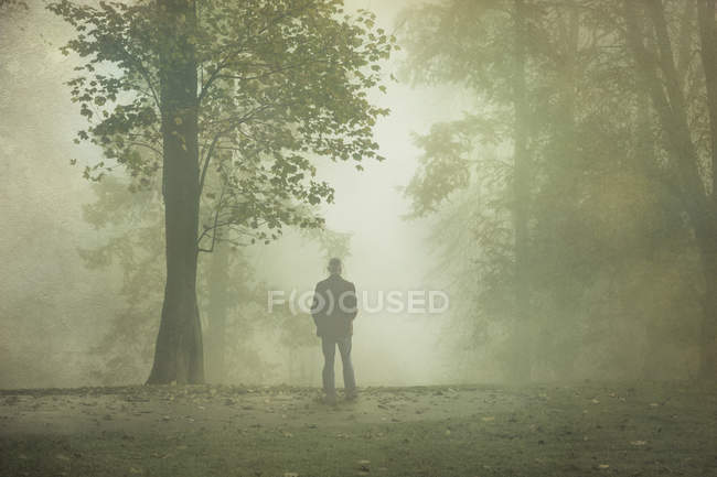 Rear view of man standing in foggy forest — Stock Photo