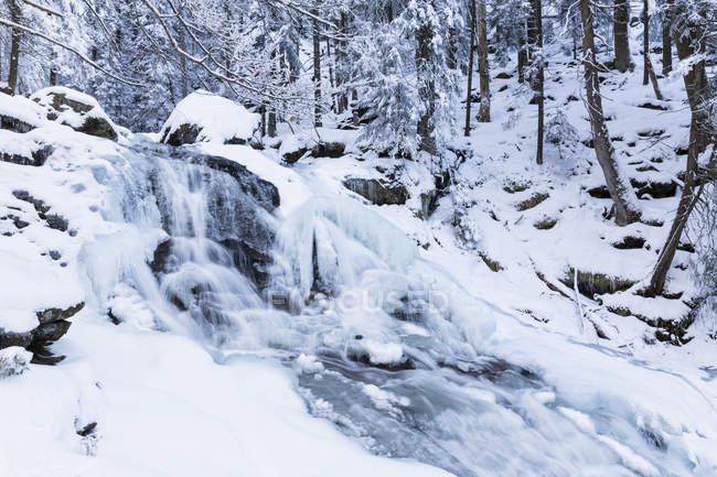 Vue des chutes de Riesloch à la forêt de Bavière, Bavière, Allemagne — Photo de stock