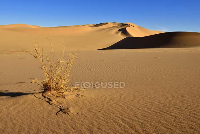 Живописный вид на природный ландшафт с песчаным дюнам Сахары пустыни, Алжир, Северная Африка — стоковое фото