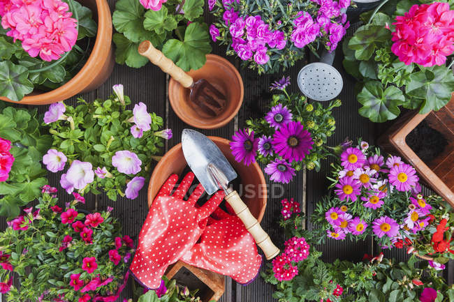 Gardening, different spring and summer flowers, gardening tools on garden table — Stock Photo