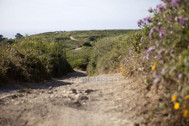 Portugal, Sintra, Praia da Ursa, caminho sobre campo — Fotografia de Stock