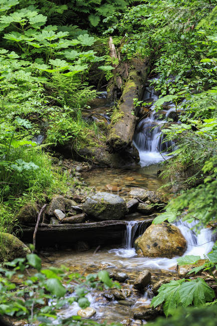 Canada, British Columbia, Mount Revelstoke National Park, Giant Cedars Boardwalk Trail — Stock Photo