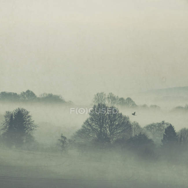 Scenic view of morning fog over fields at North Rhine-Westphalia, Gernany — Stock Photo