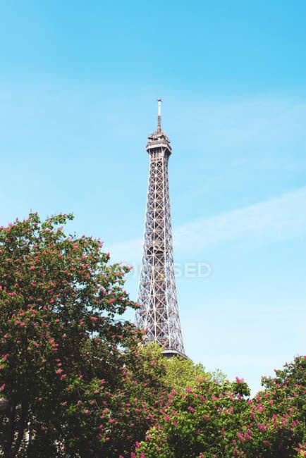 Francia, Parigi, Torre Eiffel tra gli alberi in fiore in una giornata di sole con cielo azzurro — Foto stock