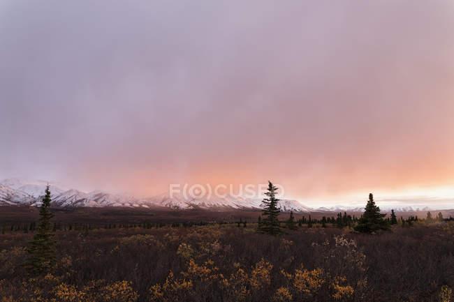 Paisagem do Parque Nacional Denali, no pôr do sol, Alasca, Estados Unidos da América — Fotografia de Stock