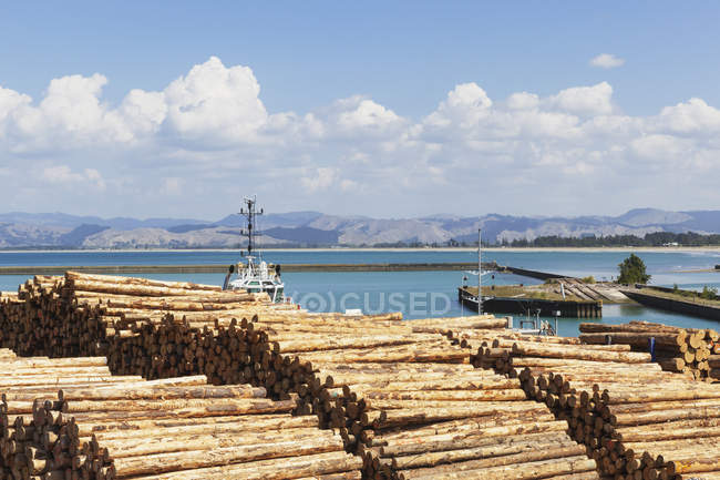 New Zealand, North Island, Gisborne, Industrial Harbour, Eastland Port, Timber industry, Log storage for shipment, timber, monterey pine — Stock Photo