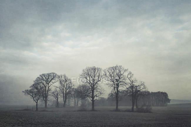 Германия, Северный Рейн-Вестфалия, группа деревьев в утреннем тумане — стоковое фото