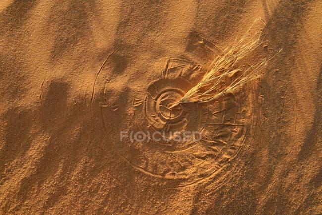Algérie, Tassili n Ajjer, Sahara, texture circulaire d'herbe mouvante sur une dune désertique — Photo de stock