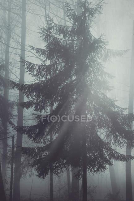Германия, Северный Рейн-Вестфалия, дерево в подсветки — стоковое фото
