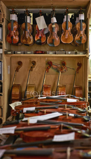 Geigen werden in der Werkstatt eines Geigenbauers repariert — Stockfoto