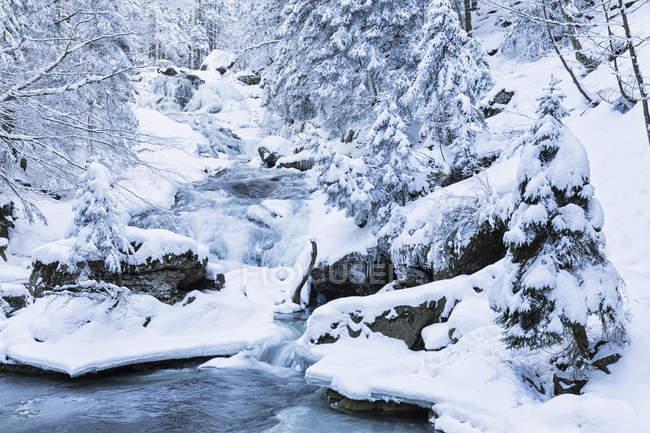Перегляд Riesloch падає у баварському лісі, Баварія, Німеччина — стокове фото