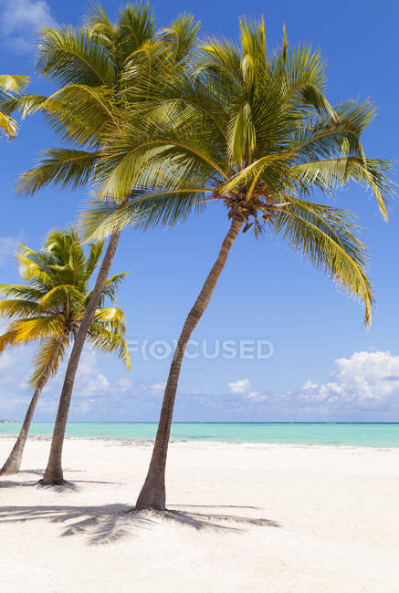 Vista della spiaggia tropicale con palme alla luce del giorno, Repubblica Dominicana — Foto stock