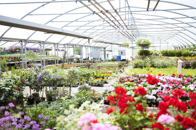 Blooming potted plants assortment in in greenhouse — Stock Photo