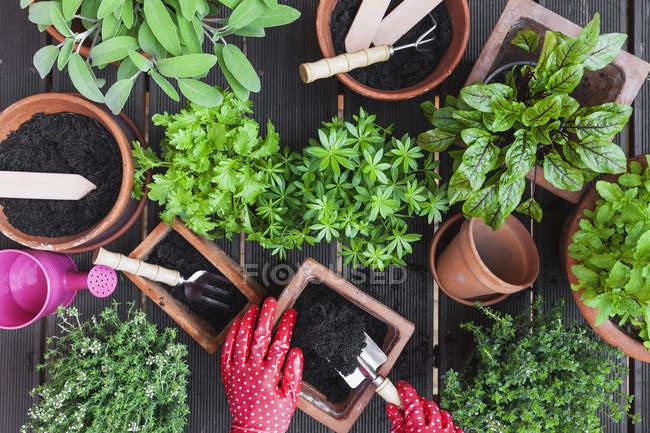 Gardening, medicinal and kitchen plants — Stock Photo