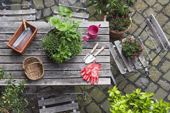 Giardinaggio, diverse erbe medicinali e da cucina e attrezzi da giardinaggio sul tavolo da giardino — Foto stock