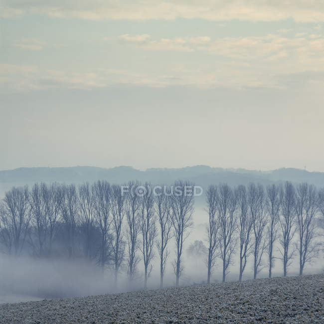 Живописный вид утренний туман над полями в Северный Рейн-Вестфалия, Германия — стоковое фото