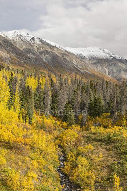 Canadá, paisaje con árboles y colinas durante el día - foto de stock