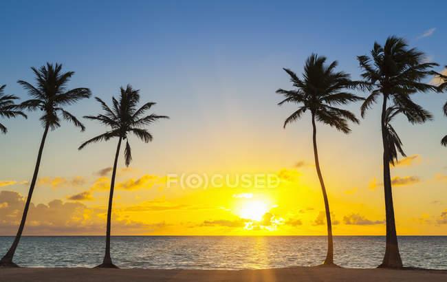 Praia tropical com palmeiras ao pôr do sol, República Dominicana — Fotografia de Stock