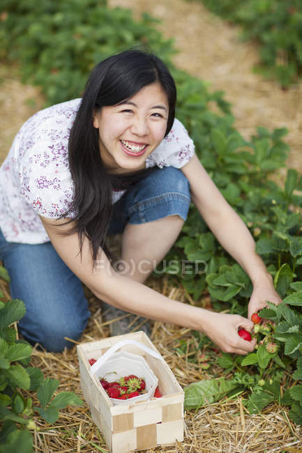 Young Japanese woman picking fresh strawberries to basket in strawberry field — Stock Photo