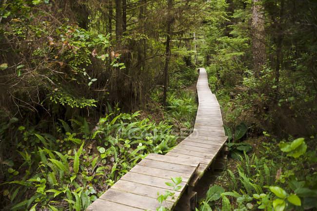 Canada, Colombie-Britannique, île de Vancouver, promenade en bois dans la forêt — Photo de stock