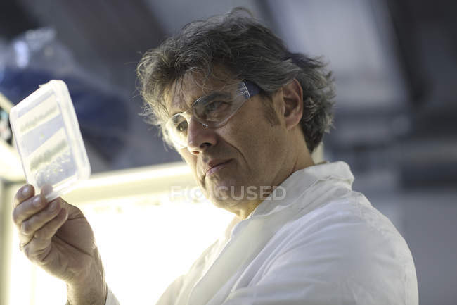 Scientist in laboratory evaluating samples — Stock Photo